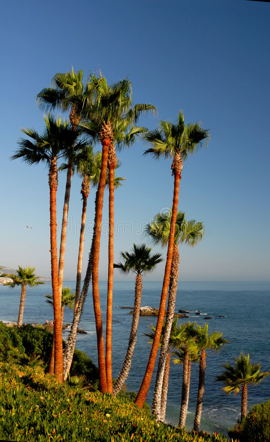 Palm Trees in Orange County stock photos