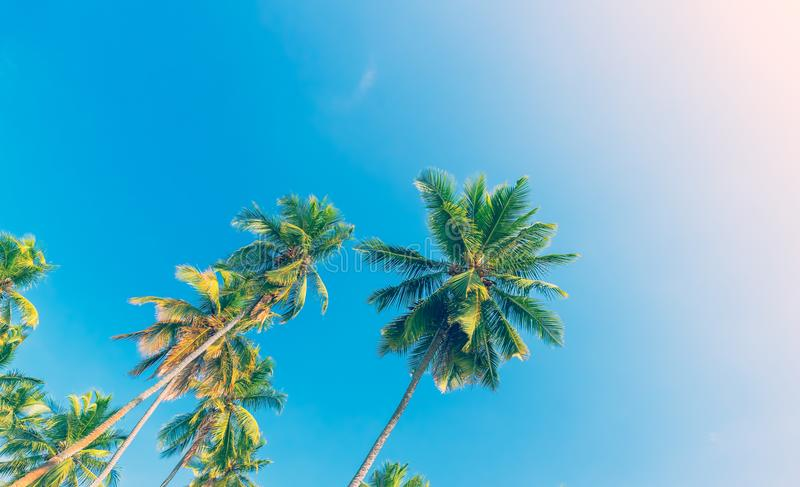 Palm trees over blue sky background stock photo