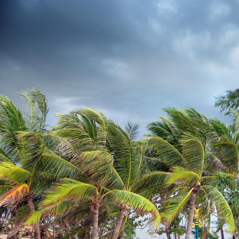 Palm Trees Over Cloudy Sky In Phuket, Tha Stock Photo