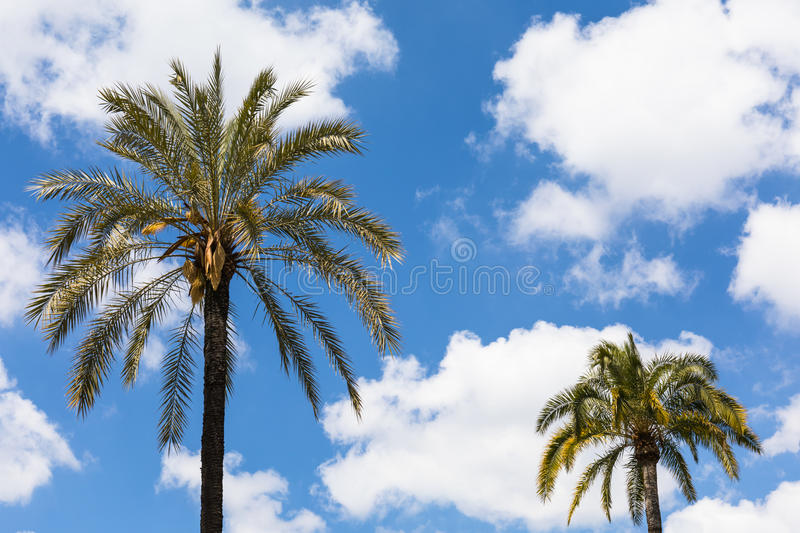 Palm trees over sky stock photos