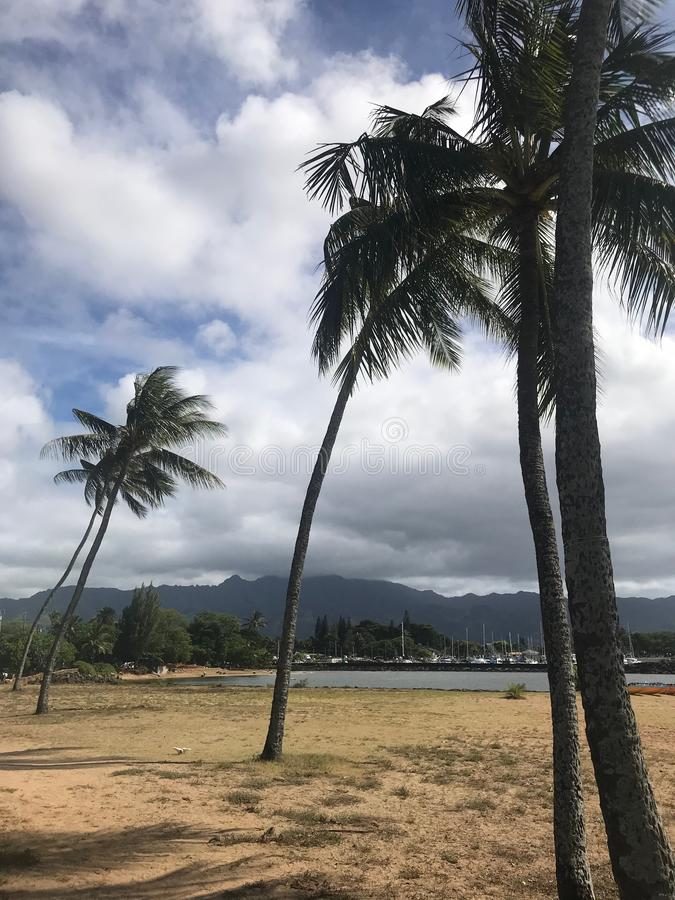 PALM TREES OVERLOOKING WAIKIKI. PALM TREES OVERLOOKING CALM WATERS HOLIDAYS RELAXING SUN AMAZING VIEW HAWAII CLOUDS OCEAN SKIES LAND REST MOUNTAINS CLEARWATER stock photography
