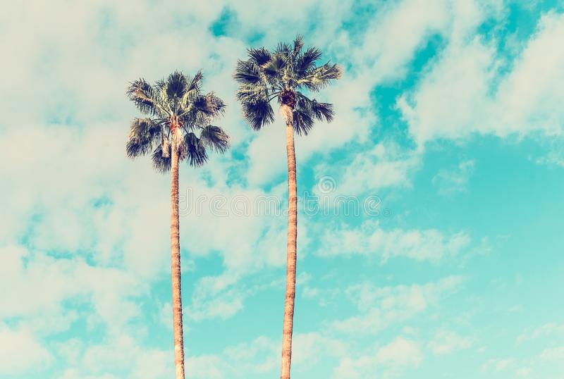 Palm Trees in Palm Springs. California On A Sunny Spring Day royalty free stock photography