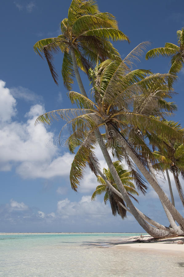 Download Palm trees in paradise stock image. Image of caribbean - 22267813