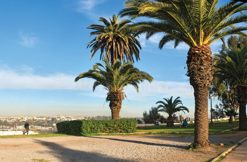 Palm trees in the park and having a rest people of Morocco stock images