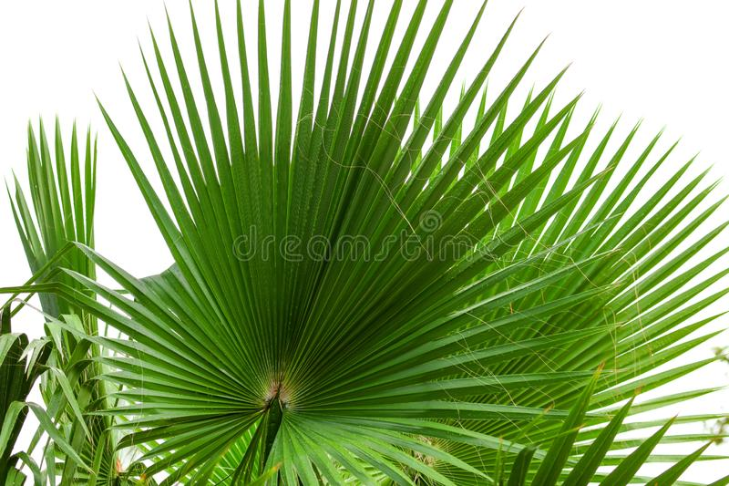 Palm trees in a park stock photo