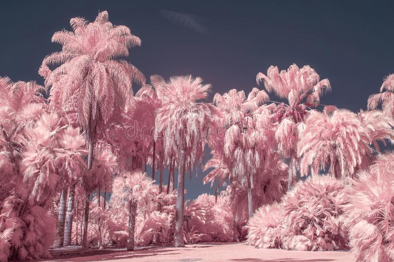 Palm Trees in Pastel Infrared Color. Collection of palm trees in pastel infrared color stock photo
