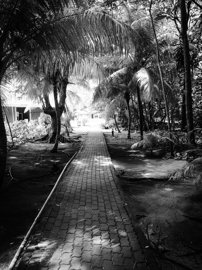 Palm trees path in black and white royalty free stock images