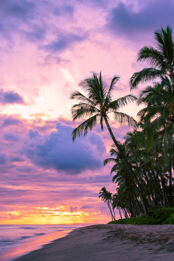 Palm Trees with Pink Sunset Sky and Ocean in Maui Hawaii stock images