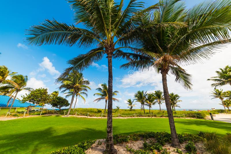 Palm trees by Pompano Beach shore on a clear day. Southern Florida, USA royalty free stock photos