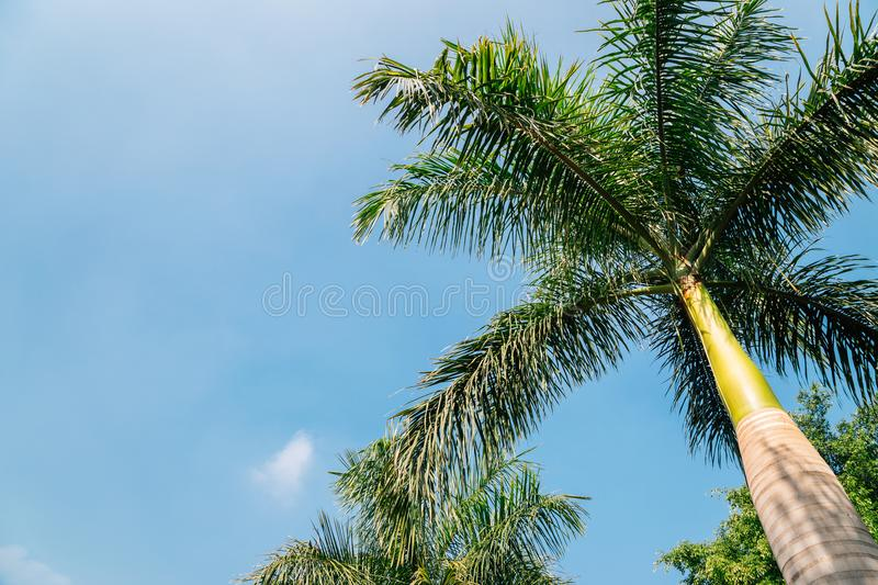 Palm trees at Rajiv Gandhi Park in Udaipur, India. Nature scenery stock image