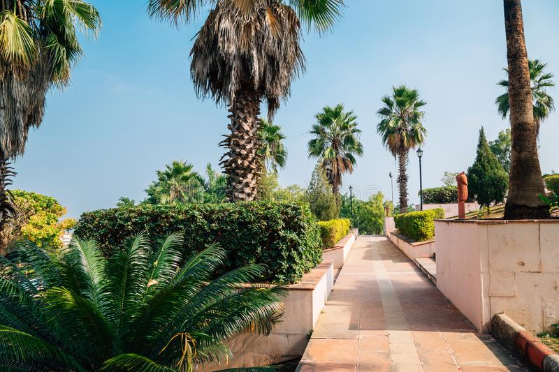 Palm trees at Rajiv Gandhi Park in Udaipur, India. Nature scenery royalty free stock photo