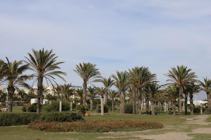 Palm trees in recreational park royalty free stock images