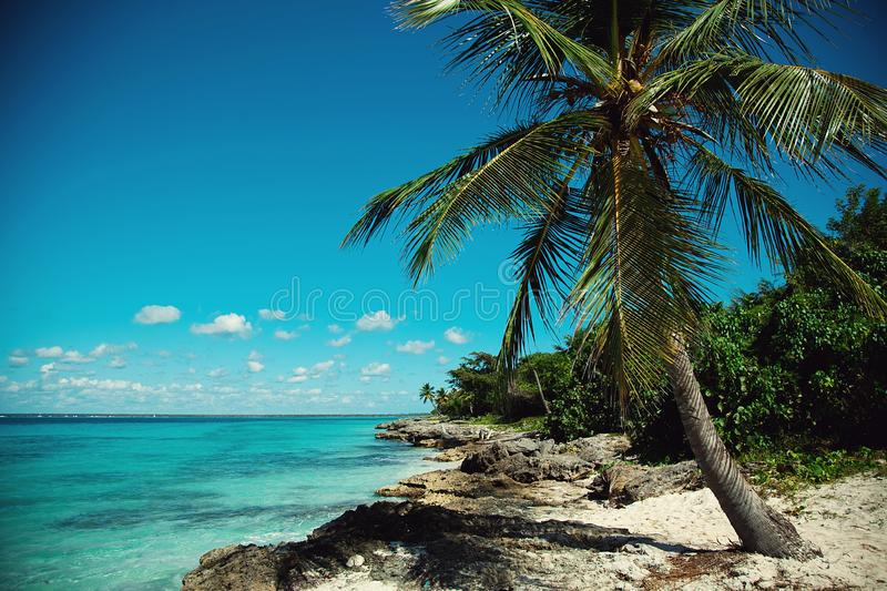 Palm trees on the Caribbean coast, turquoise sea. Palm trees, reefs and stones on the Caribbean coast, bright turquoise sea stock photos