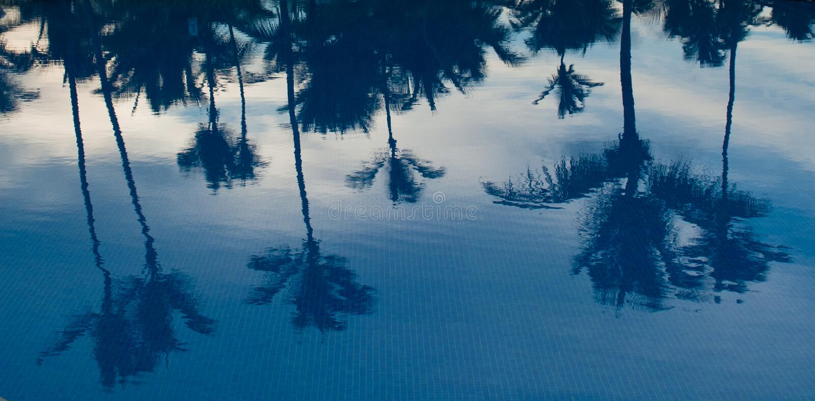 Download Palm Trees Refelction In The Pool At Sunset Stock Photo - Image of pool, caribbean: 25748720