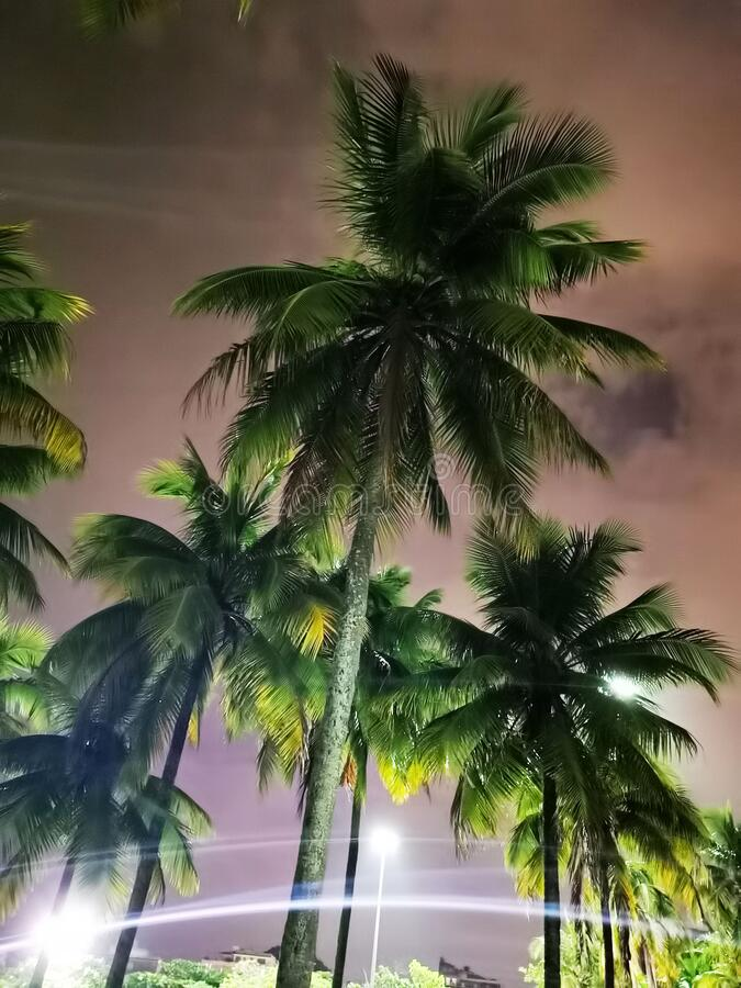 Palm trees in town center Rio de Janeiro royalty free stock image