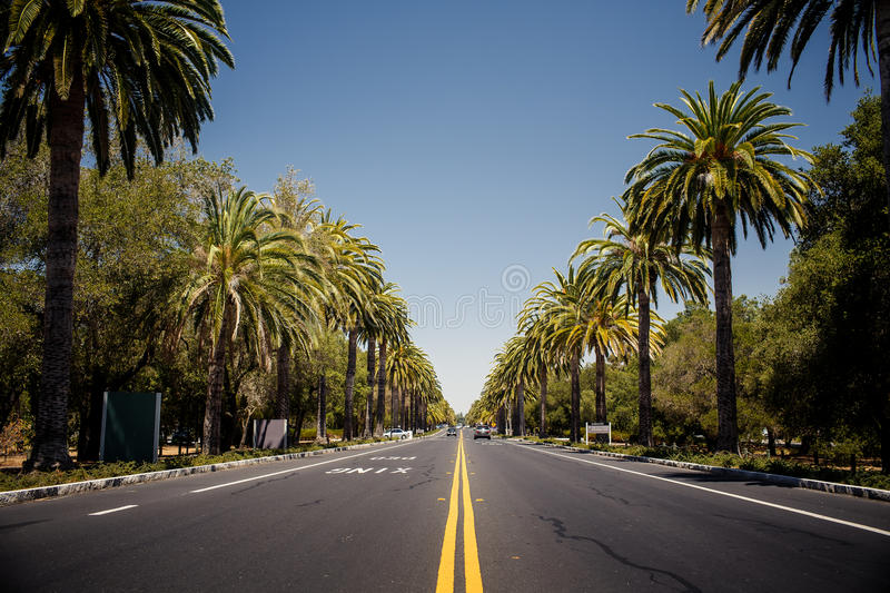 Palm trees road stock photo