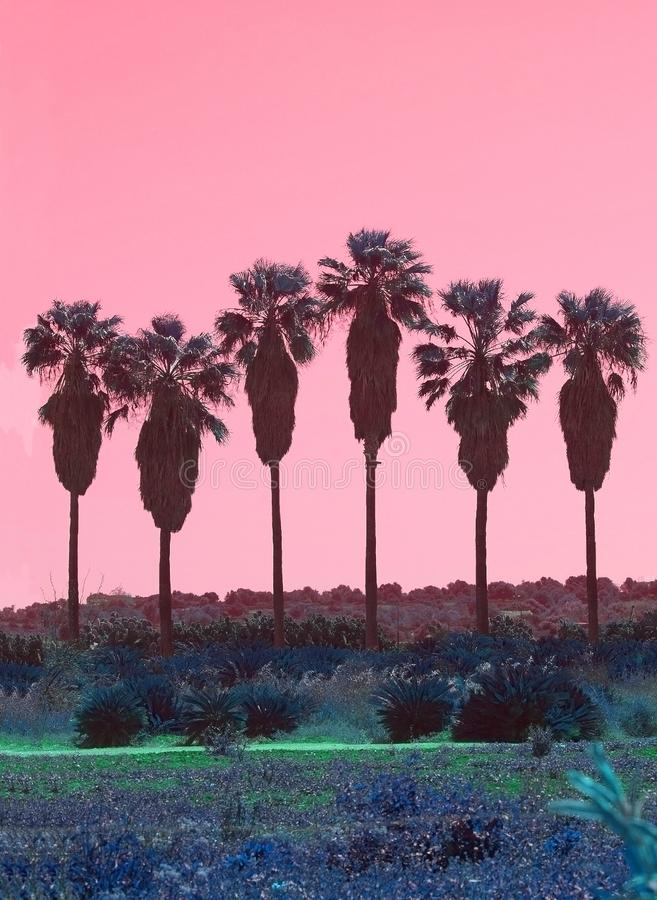 Palm trees in a row abstract surrealistic pink and green color royalty free stock photo