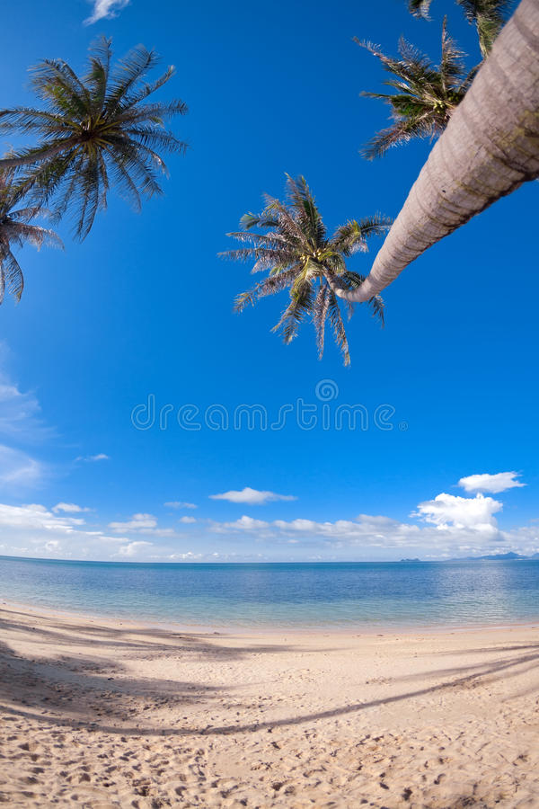 Download Palm Trees On The Sand Beach Stock Photo - Image of peace, season: 25319162