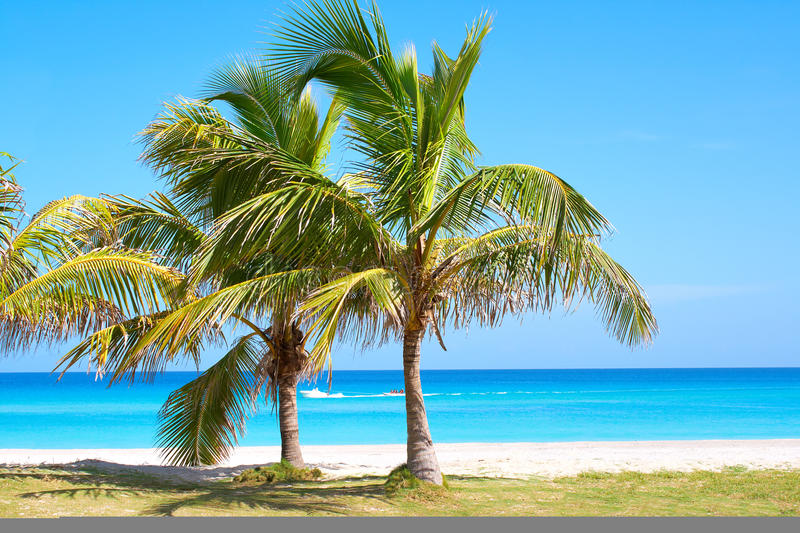 Download Palm Trees In A Sandy Beach Stock Photo - Image: 11049492