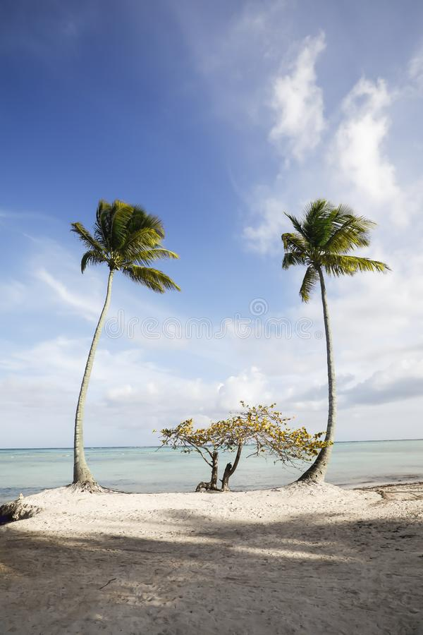 Palm trees on beach in the Caribbean against blue sky with white clouds. royalty free stock images