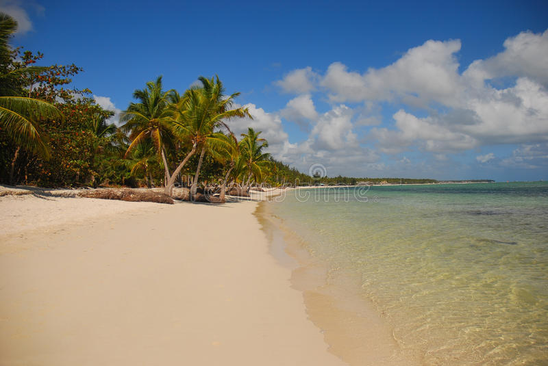 Palm trees and sandy beach in Dominican Republic royalty free stock images