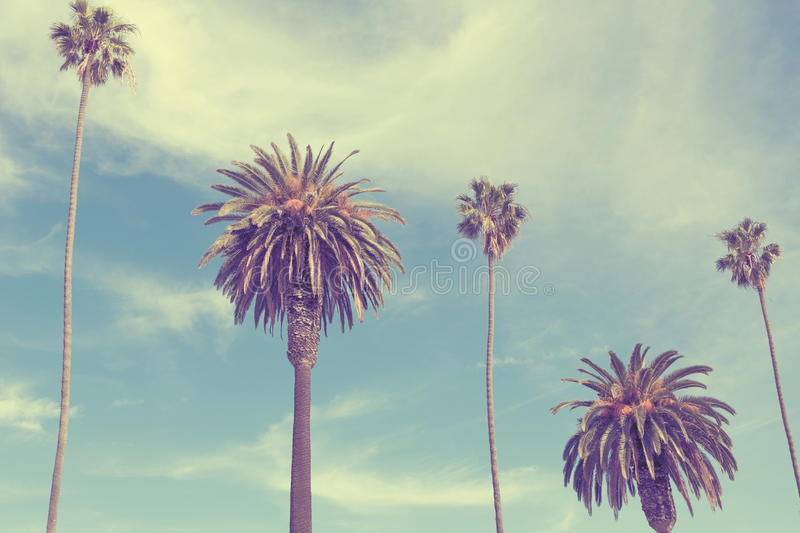 Palm trees at Santa Monica beach. royalty free stock photos