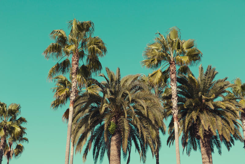 Palm trees at Santa Monica beach. stock photos
