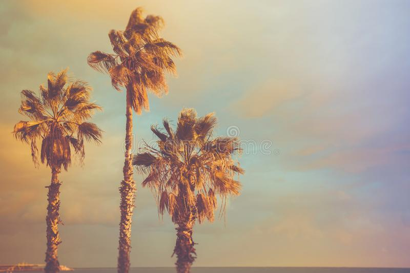 Palm Trees at Seashore Dramatic Beautiful Blue Pink Peachy Sky at Sunset. Pastel Colors Flare 60s Vintage Toning.Calm Sea Horizon stock photos