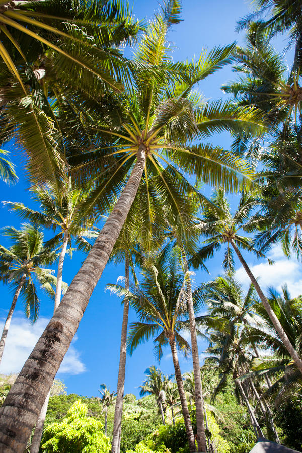 Download Palm trees stock image. Image of relaxation, horizon - 31336801