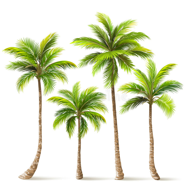 Palm Trees Set. Vector. Palm trees with shadow isolated on white. Vector illustration vector illustration