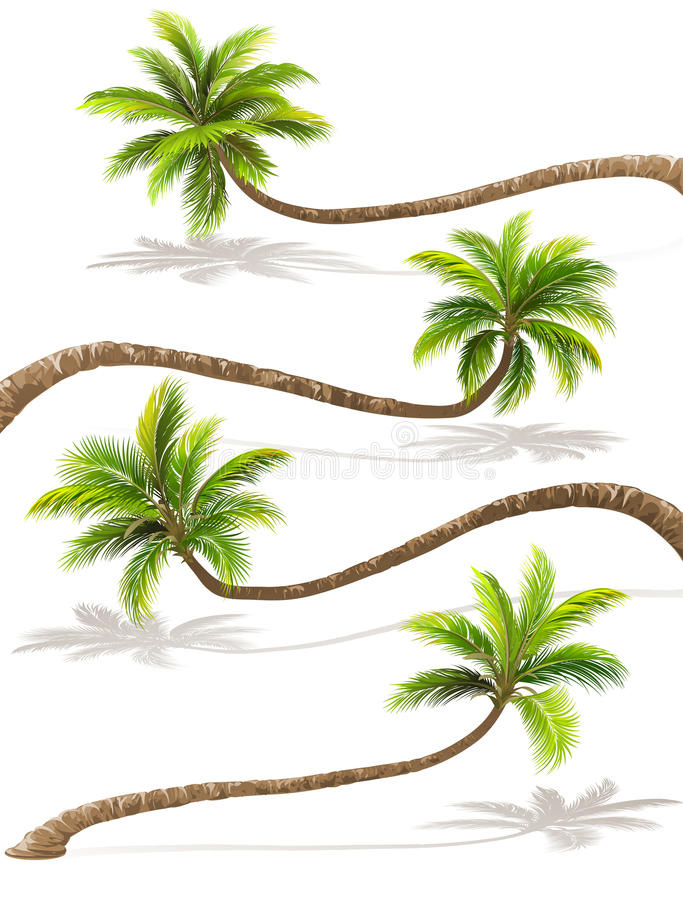 Palm trees with shadow. Vector vector illustration