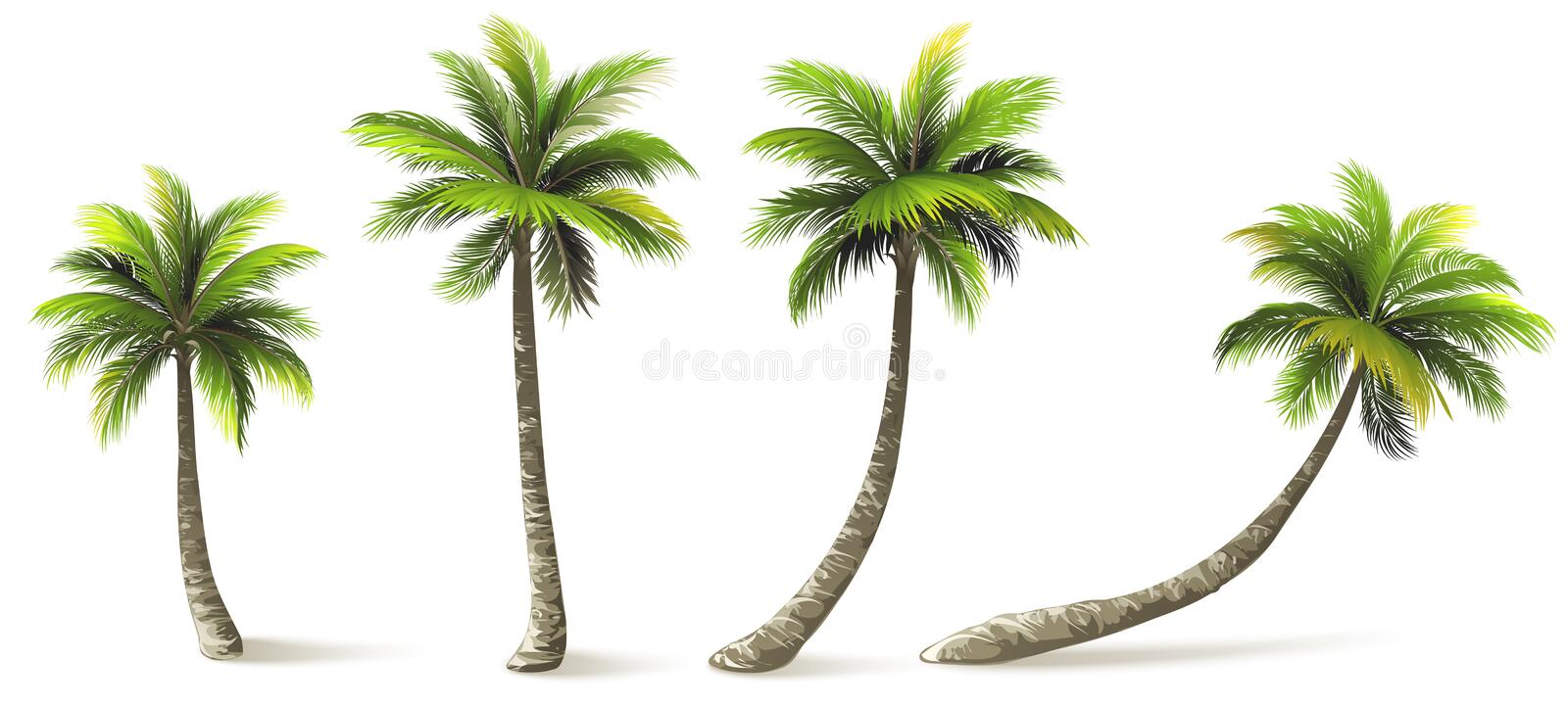 Palm Trees. With shadow on white. Vector illustration stock illustration