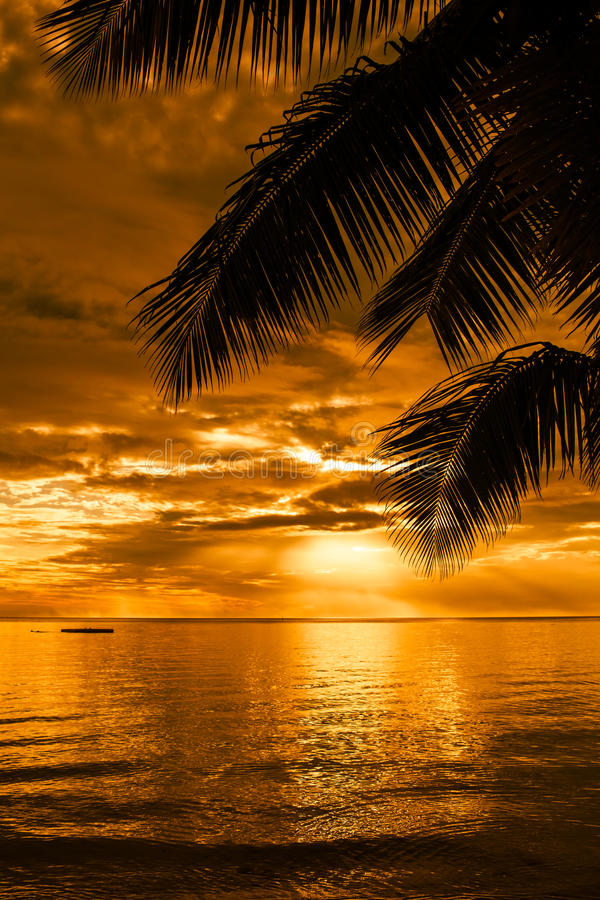 Download Palm Trees Silhouette On A Beautiful Beach At Sunset Stock Photography - Image: 30791672