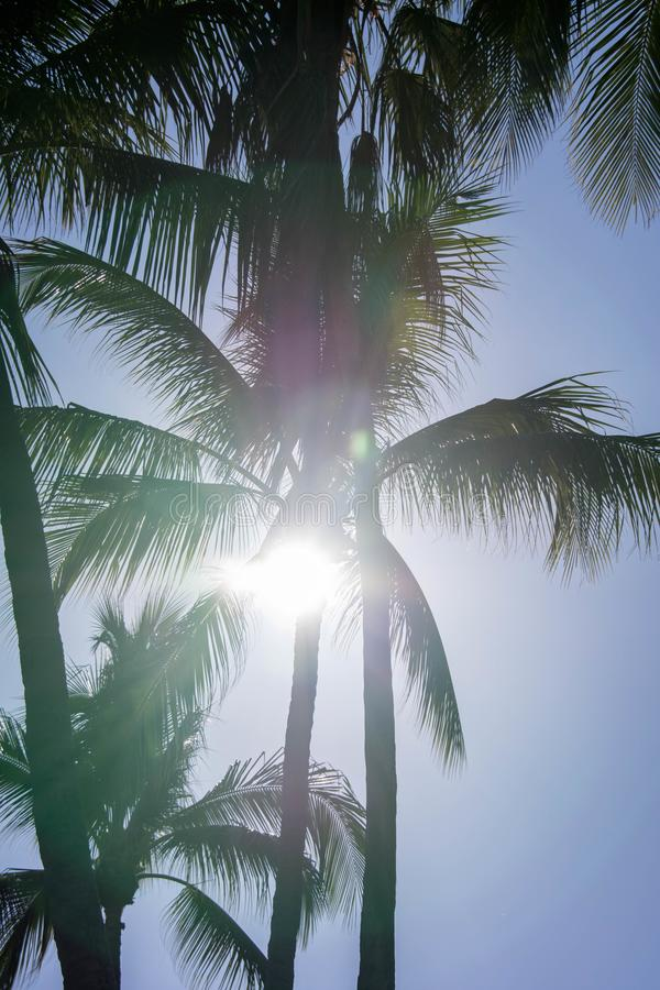 Palm trees silhouette. Beautiful tropical background, blue sky, sun glare. Summer vacation, nature, travel stock photos