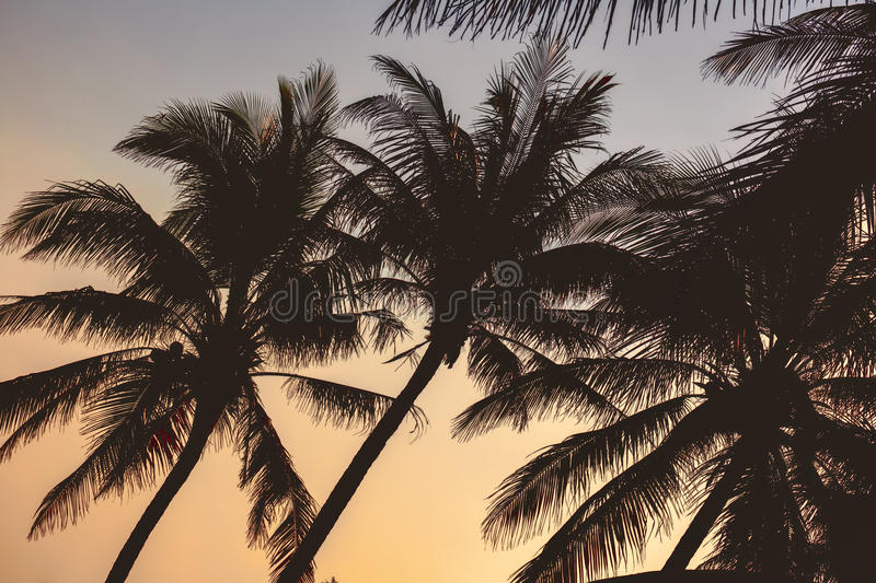 Palm trees silhouette at sunset in Hainan Island - China. Palm trees silhouette in sunset in Hainan Island - China stock photography