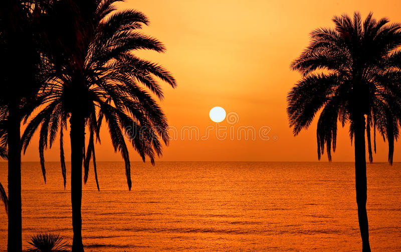 Palm trees silhouette at sunset. Tenerife, Spain royalty free stock photos