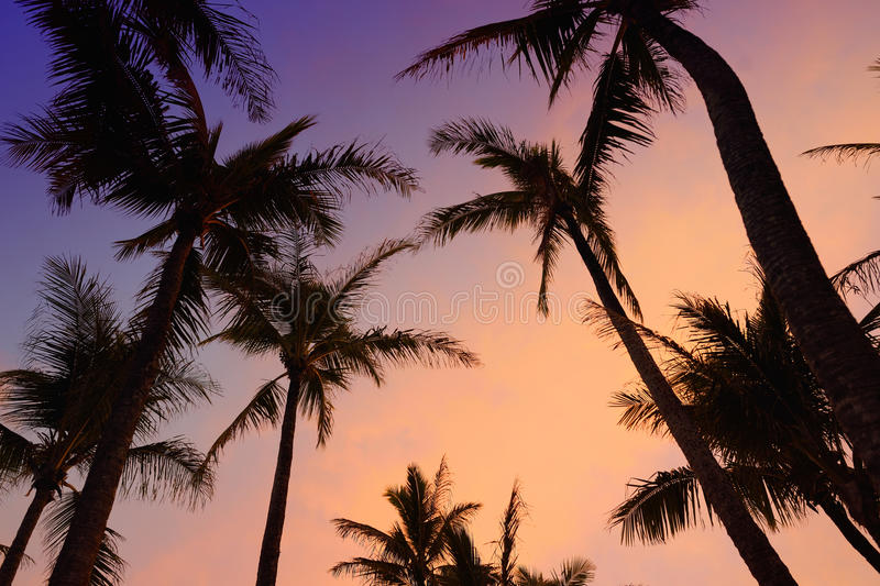 Palm trees silhouette on sunset tropical beach on Hawaii stock photos