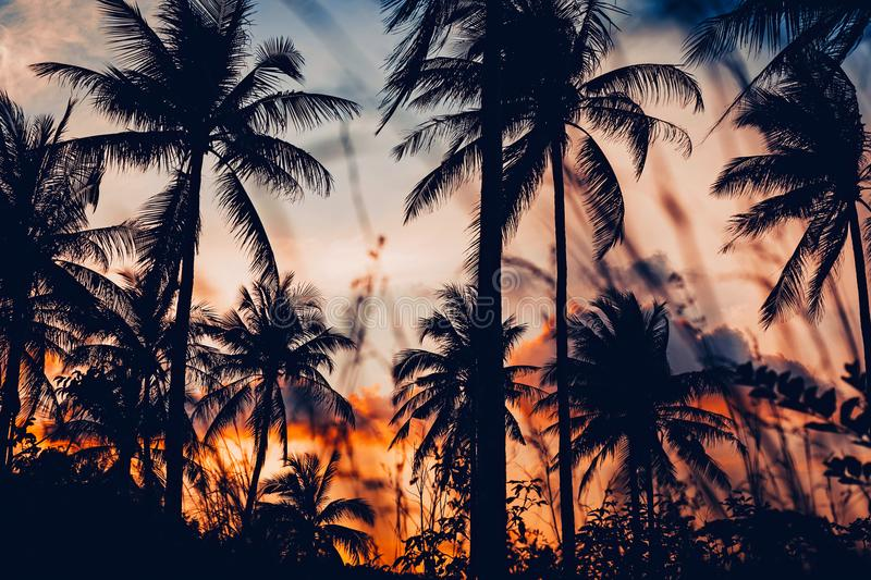 Palm trees silhouette at sunset. Wall paper stock photos