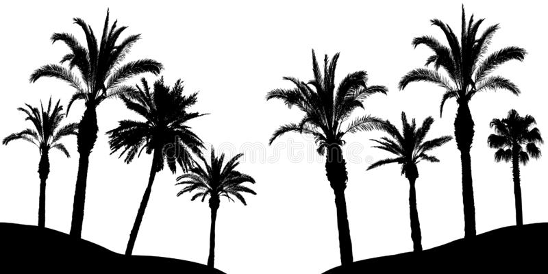 Palm trees silhouette, vector illustration.  stock illustration