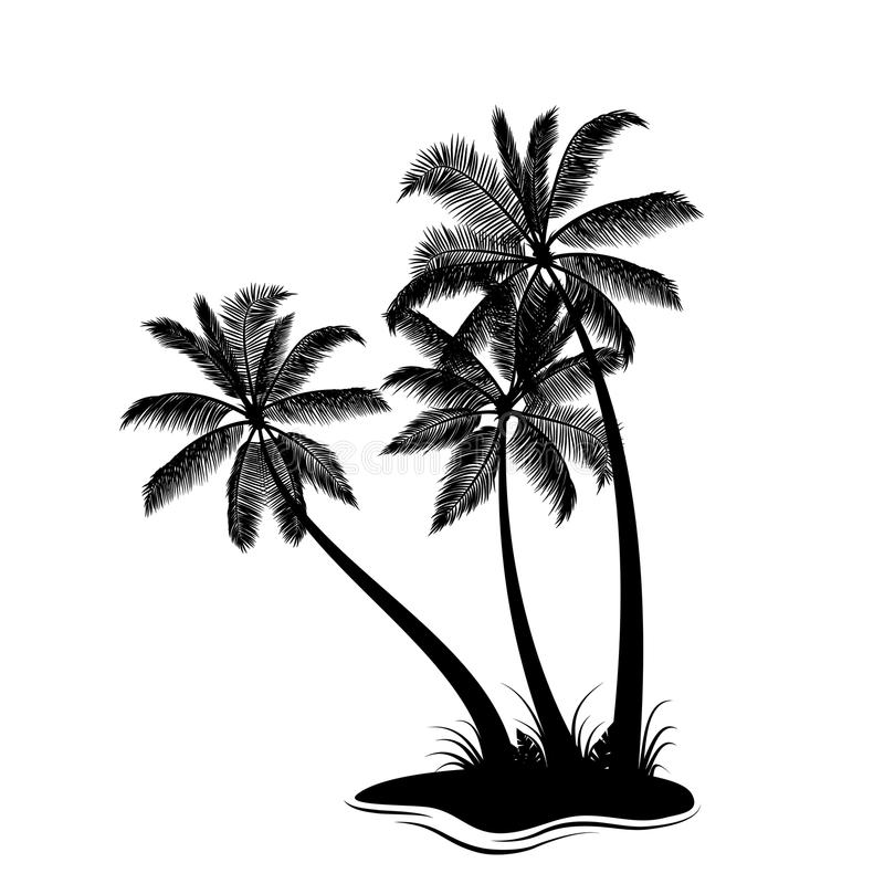 Palm trees silhouette. On white vector illustration