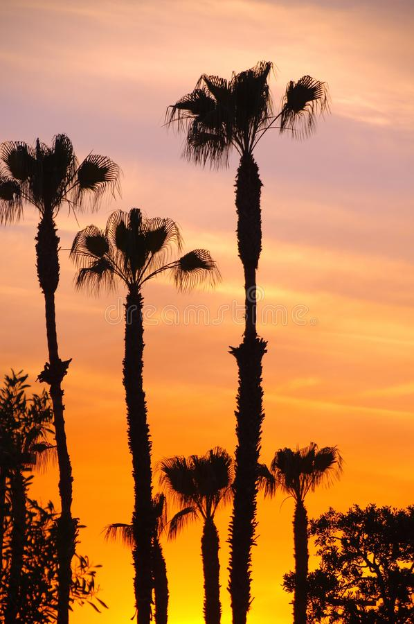 Palm trees silhouetted by an orange sky at sunset stock image