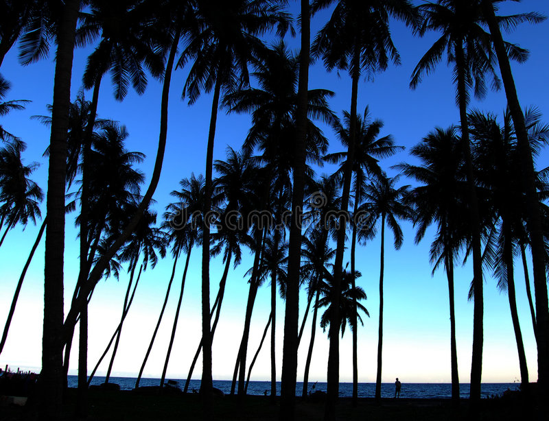Palm trees silhouettes royalty free stock images