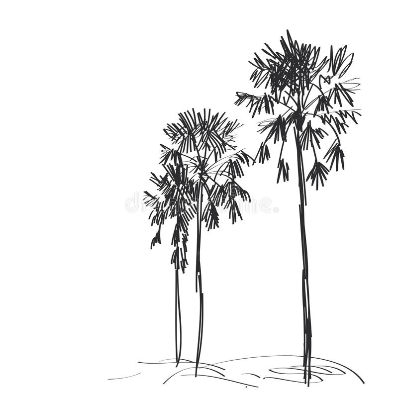 Palm trees sketch, black contour isolated on white background. simple art, Can be used for Card banner template, copy space. Vector illustration royalty free illustration