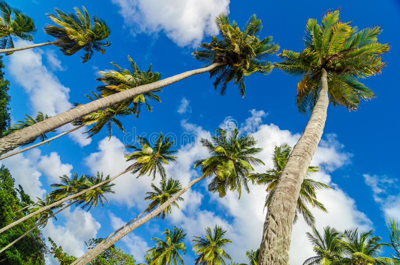 Palm Trees And Sky Stock Photo