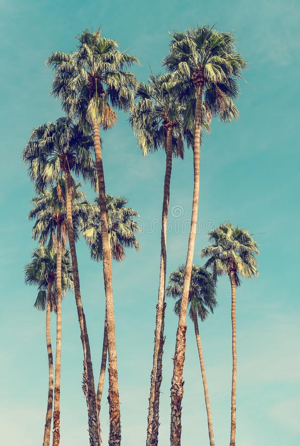 Palm Trees in Palm Springs. California On A Sunny Spring Day royalty free stock images