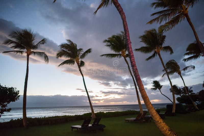 Hawaiian Palm Trees. Palm trees in the state of Hawaii royalty free stock photography