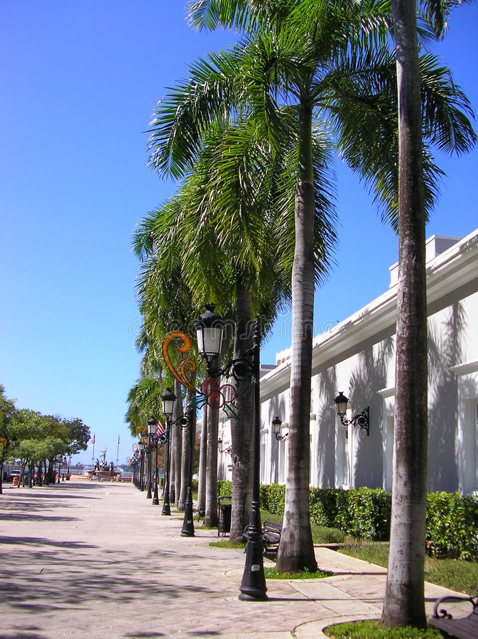Palm trees on street royalty free stock photos