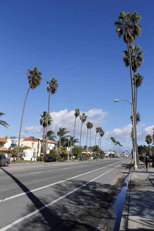 Palm trees on the street in Venice Beach, California stock photo