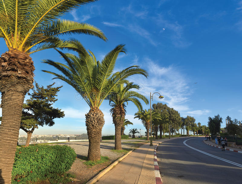 Palm trees on the streets of Morocco and walking people stock images