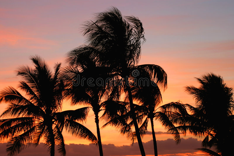 Download Palm Trees at Sunset stock image. Image of nature, palms - 14287
